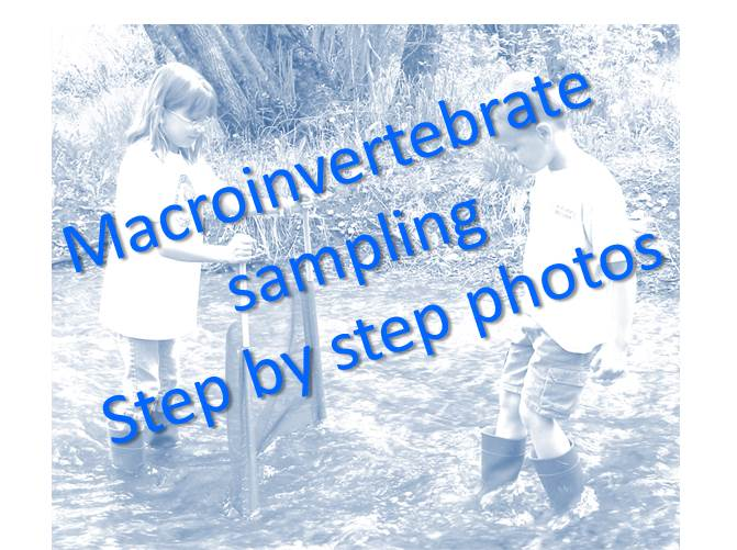 Macroinvertebrate sampling step by step photos